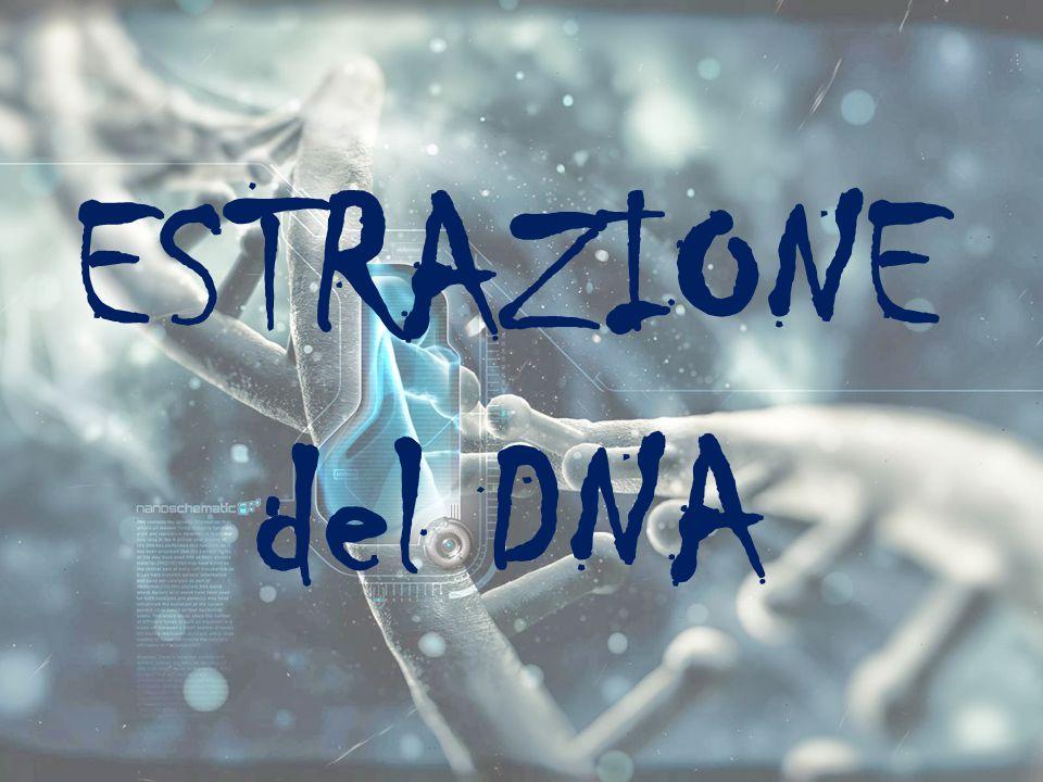 ESTRAZIONE del DNA