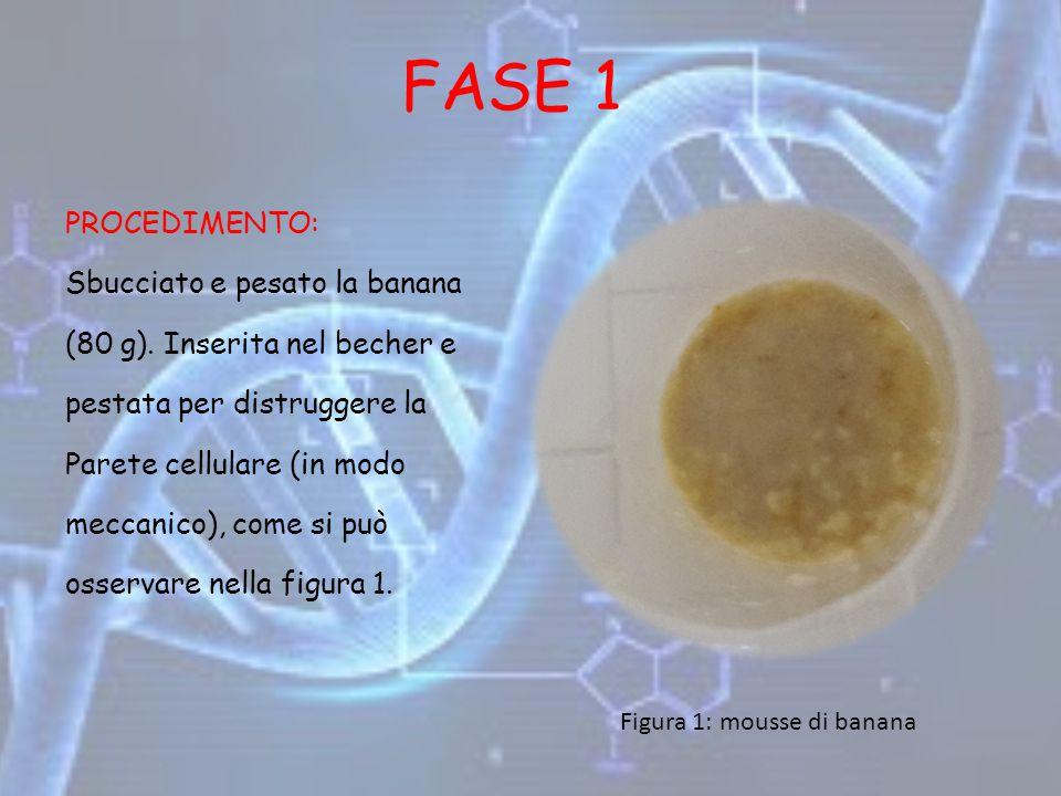 FASE 1 PROCEDIMENTO: Sbucciato e pesato la banana (80 g). Inserita nel becher e pestata per distruggere la Parete cellulare (in modo meccanico), come