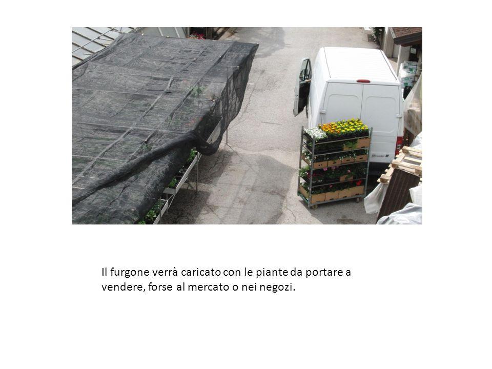 Il furgone verrà caricato con le piante da portare a vendere, forse al mercato o nei negozi.