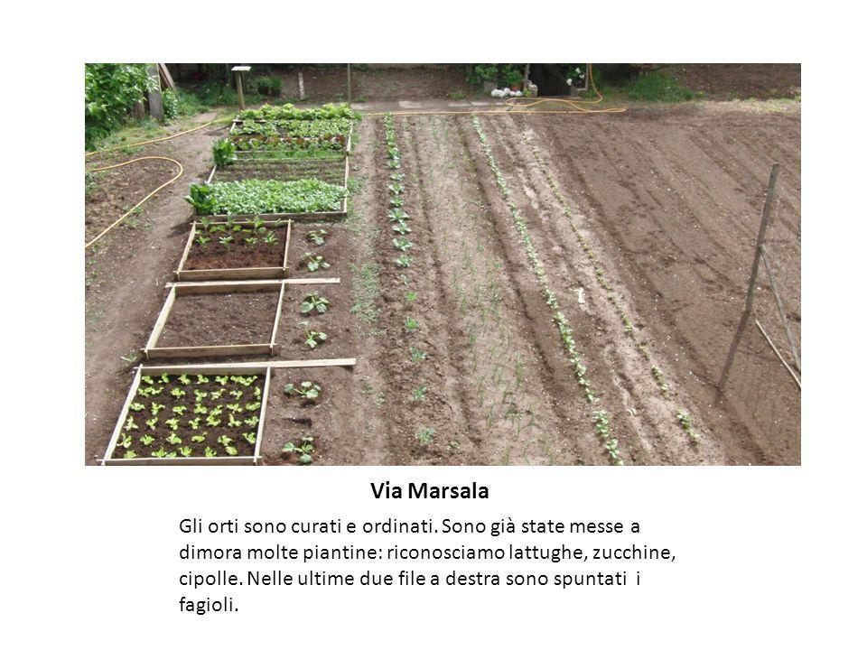 Via Marsala Gli orti sono curati e ordinati.