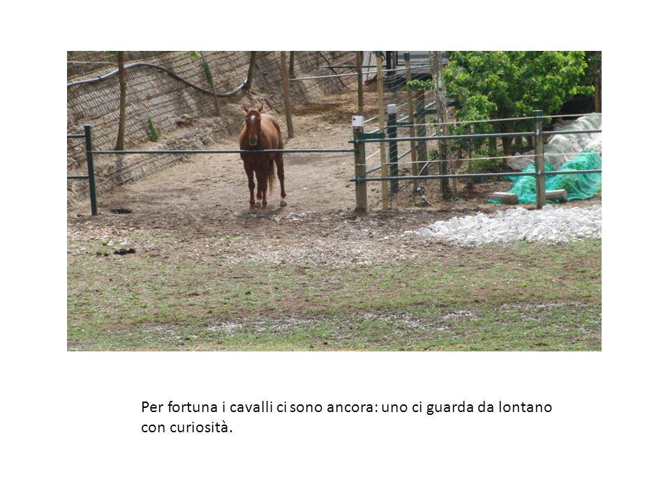 Per fortuna i cavalli ci sono ancora: uno ci guarda da lontano con curiosità.