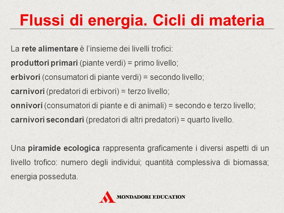 Flussi di energia. Cicli di materia La rete alimentare è l'insieme dei livelli trofici: produttori primari (piante verdi) = primo livello; erbivori (c