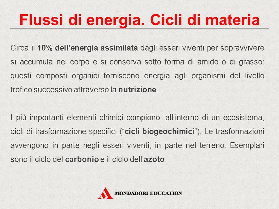 Flussi di energia. Cicli di materia Circa il 10% dell'energia assimilata dagli esseri viventi per sopravvivere si accumula nel corpo e si conserva sot