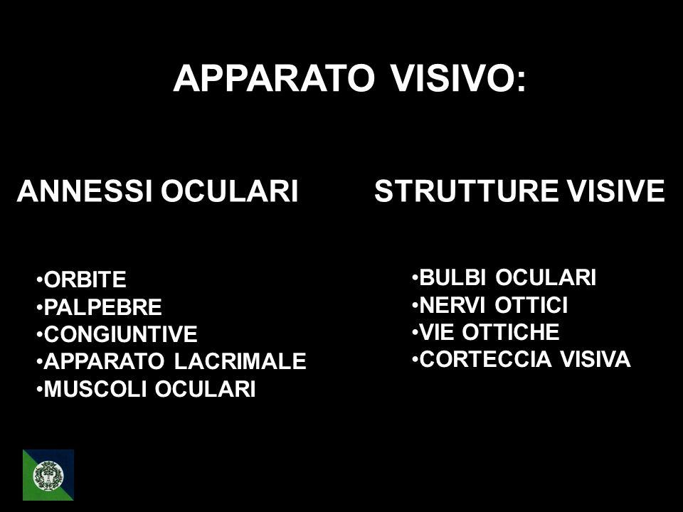 APPARATO VISIVO: ANNESSI OCULARI STRUTTURE VISIVE ORBITE PALPEBRE CONGIUNTIVE APPARATO LACRIMALE MUSCOLI OCULARI BULBI OCULARI NERVI OTTICI VIE OTTICH