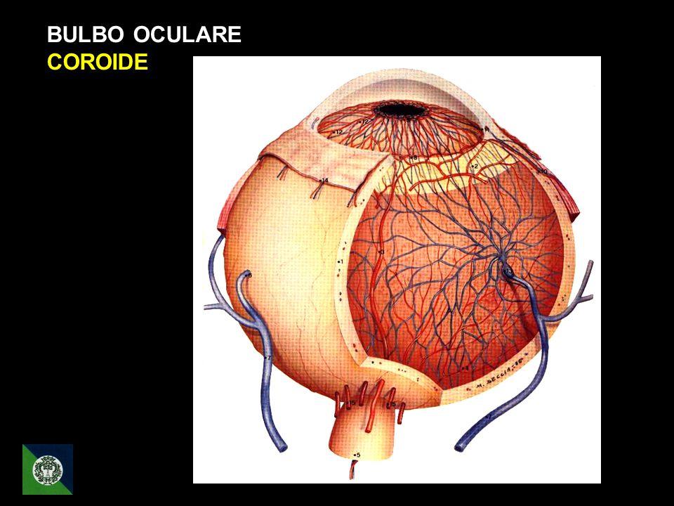 BULBO OCULARE COROIDE