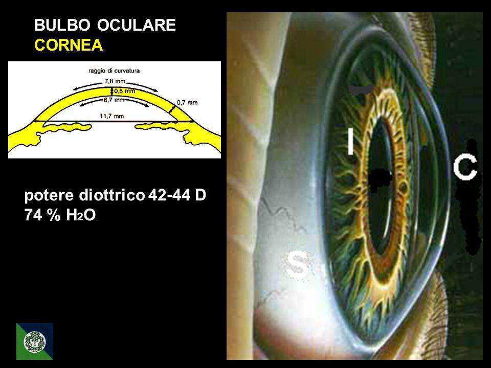 BULBO OCULARE CORNEA potere diottrico 42-44 D 74 % H 2 O