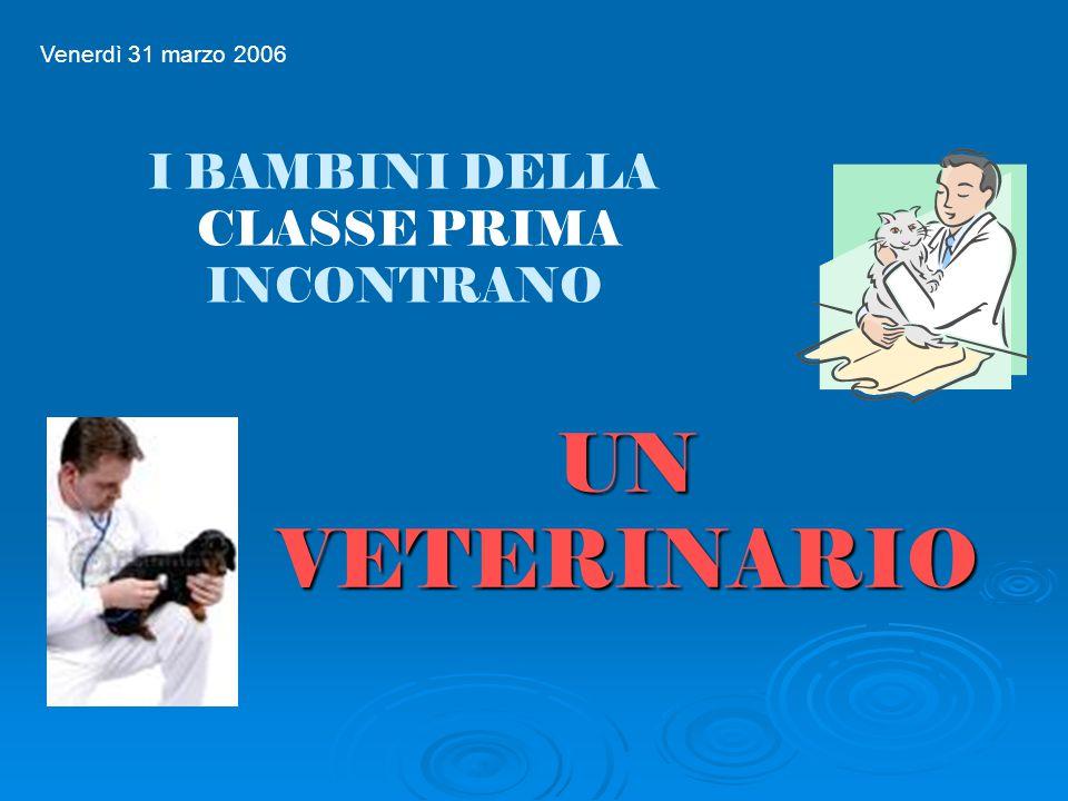 UN VETERINARIO UN VETERINARIO Venerdì 31 marzo 2006 I BAMBINI DELLA CLASSE PRIMA INCONTRANO