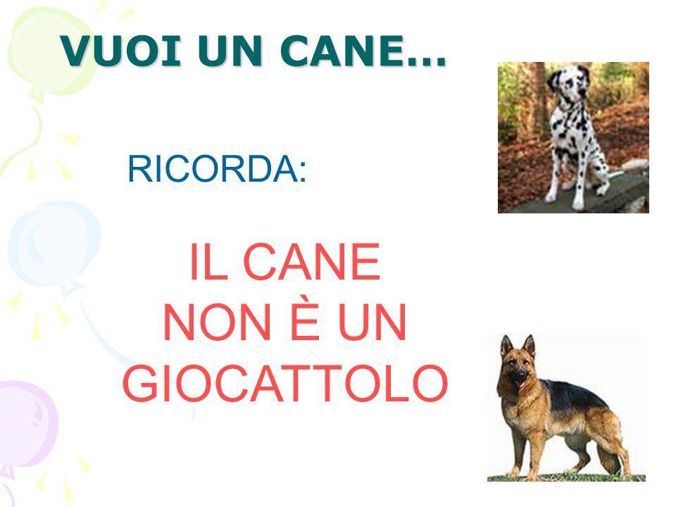 VUOI UN CANE… IL CANE NON È UN GIOCATTOLO RICORDA: