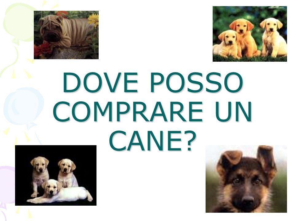 DOVE POSSO COMPRARE UN CANE?