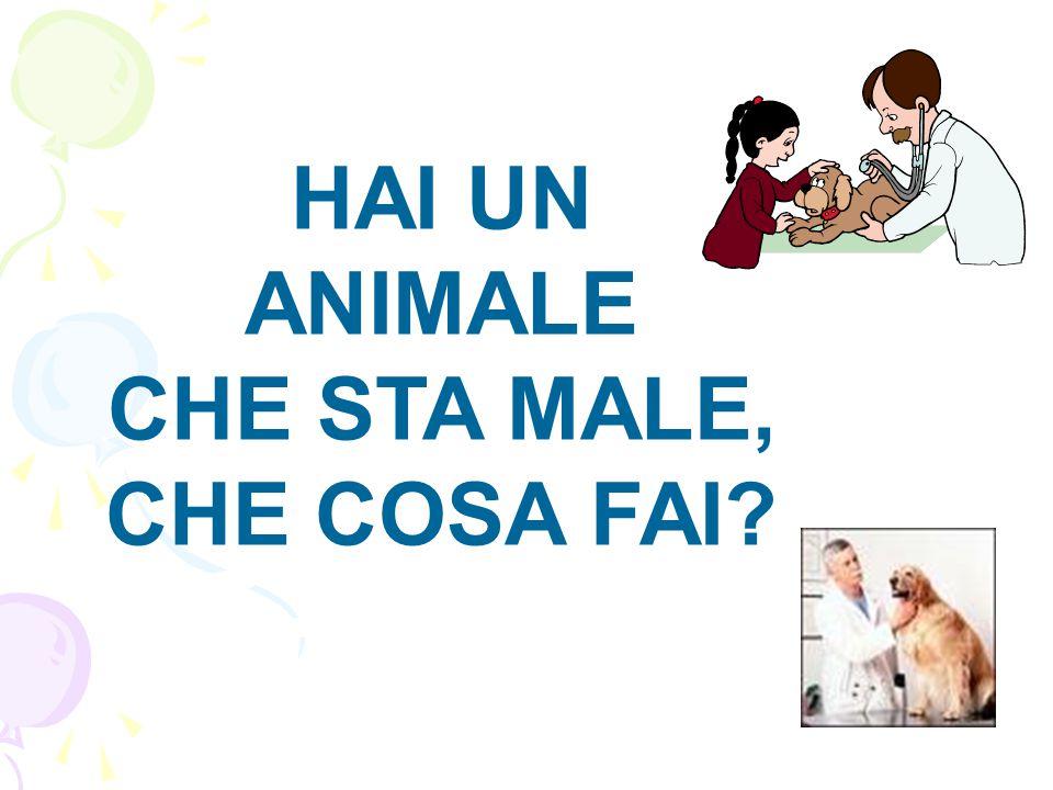 HAI UN ANIMALE CHE STA MALE, CHE COSA FAI?