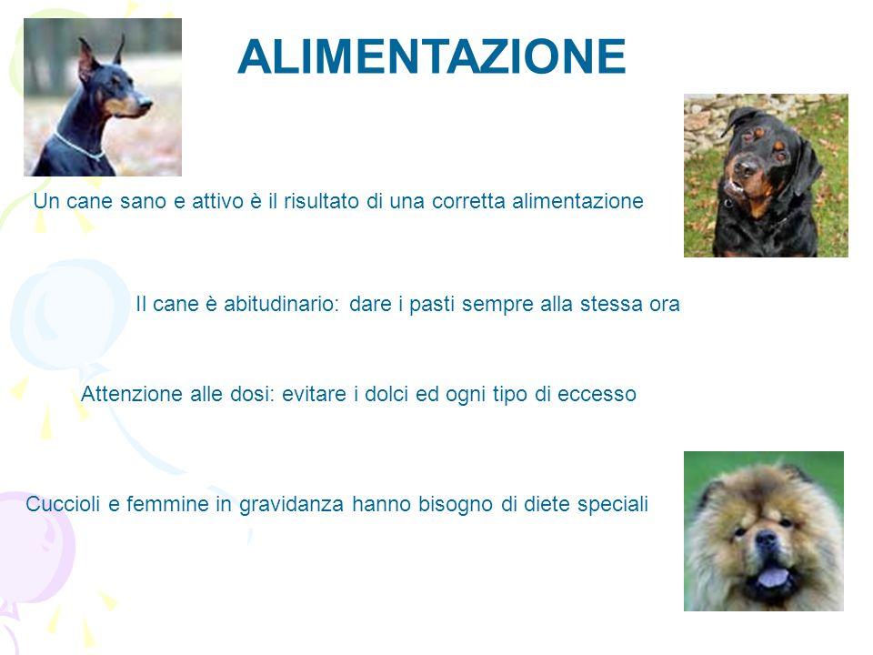 Cuccioli e femmine in gravidanza hanno bisogno di diete speciali ALIMENTAZIONE Un cane sano e attivo è il risultato di una corretta alimentazione Il c