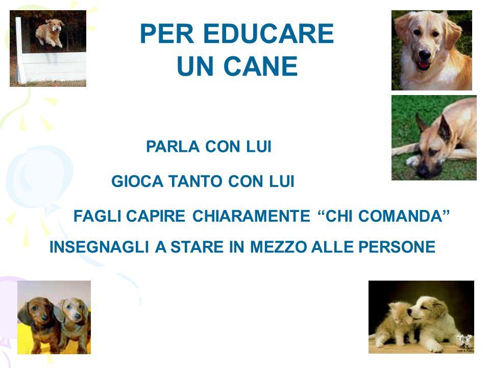 """GIOCA TANTO CON LUI PER EDUCARE UN CANE PARLA CON LUI FAGLI CAPIRE CHIARAMENTE """"CHI COMANDA"""" INSEGNAGLI A STARE IN MEZZO ALLE PERSONE"""