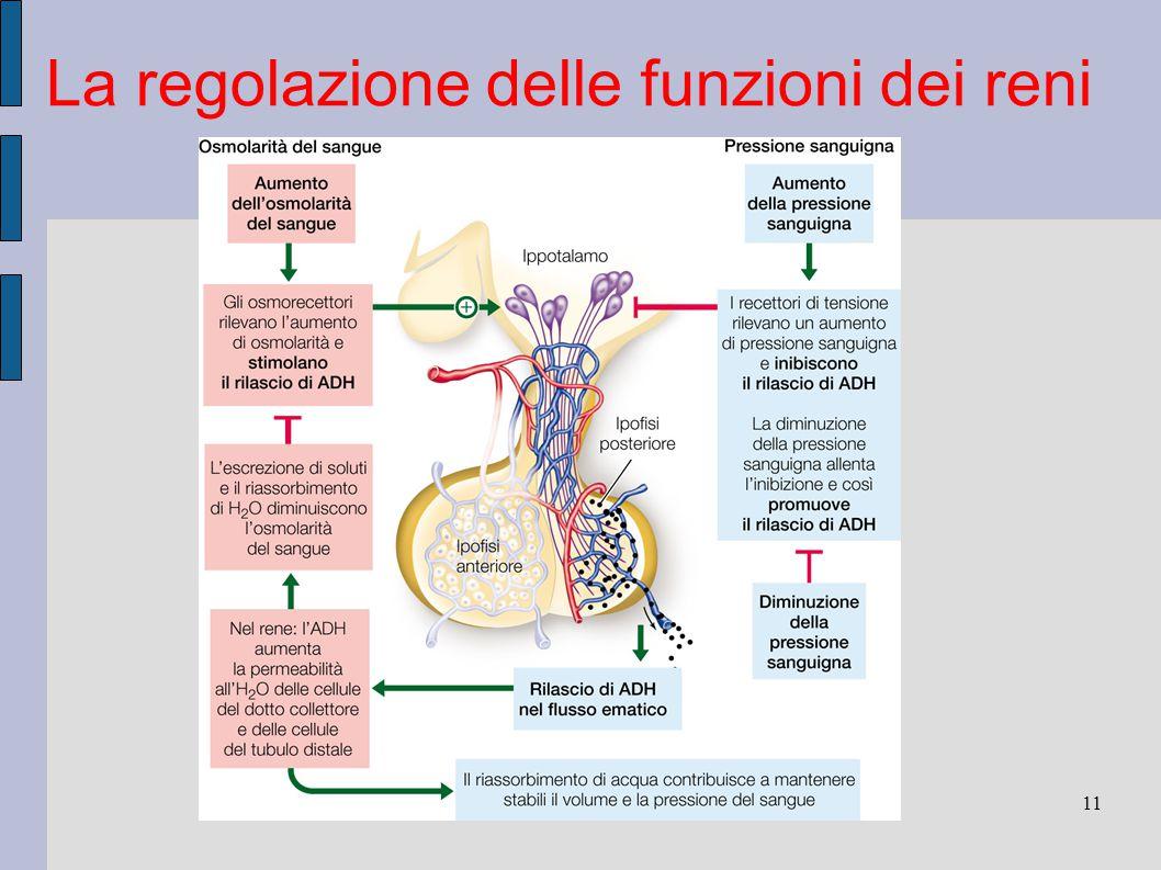 11 La regolazione delle funzioni dei reni