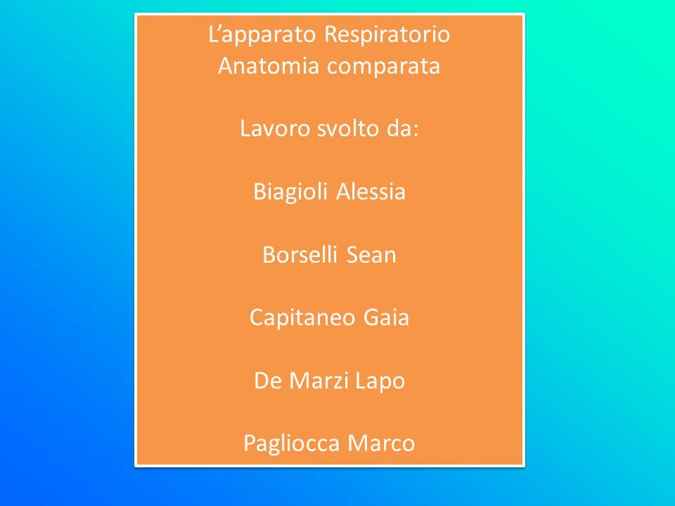 L'apparato Respiratorio Anatomia comparata Lavoro svolto da: Biagioli Alessia Borselli Sean Capitaneo Gaia De Marzi Lapo Pagliocca Marco L'apparato Re