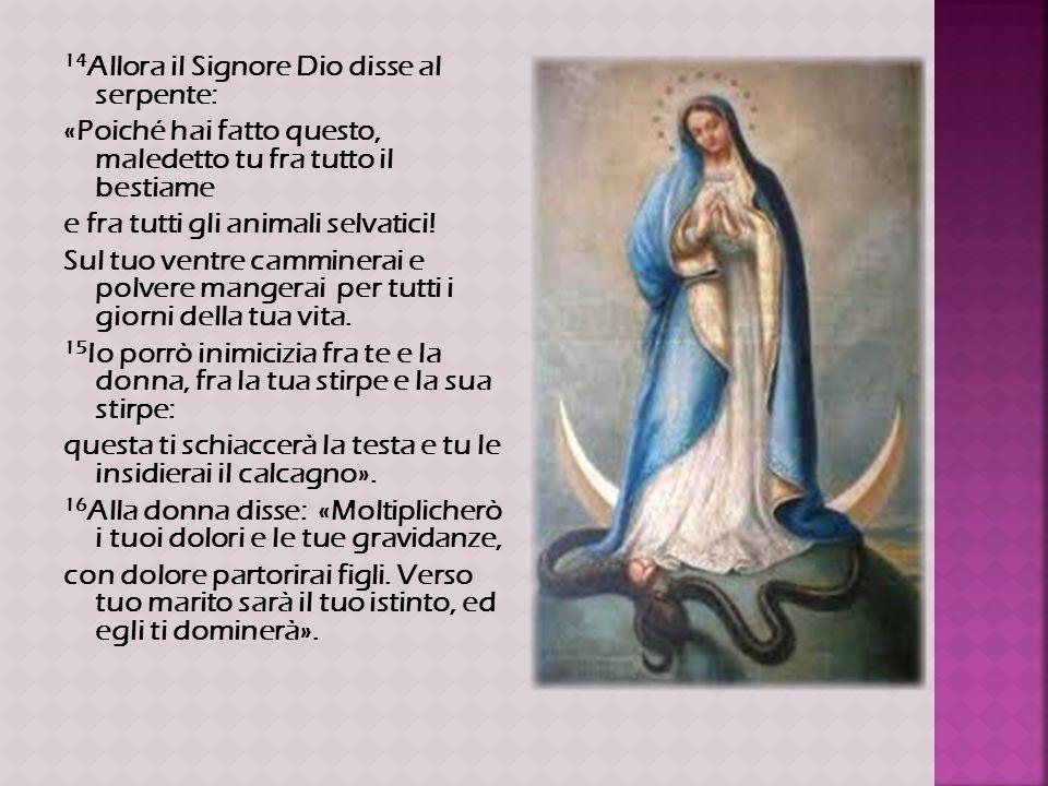 14 Allora il Signore Dio disse al serpente: «Poiché hai fatto questo, maledetto tu fra tutto il bestiame e fra tutti gli animali selvatici! Sul tuo ve