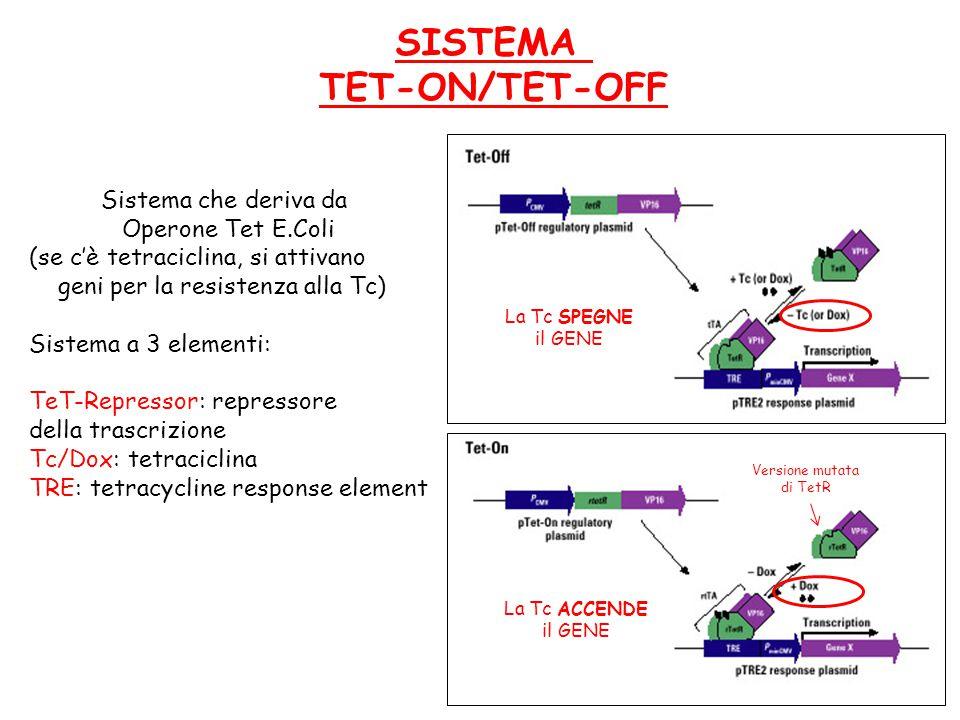 SISTEMA TET-ON/TET-OFF Sistema che deriva da Operone Tet E.Coli (se c'è tetraciclina, si attivano geni per la resistenza alla Tc) Sistema a 3 elementi: TeT-Repressor: repressore della trascrizione Tc/Dox: tetraciclina TRE: tetracycline response element Versione mutata di TetR La Tc SPEGNE il GENE La Tc ACCENDE il GENE