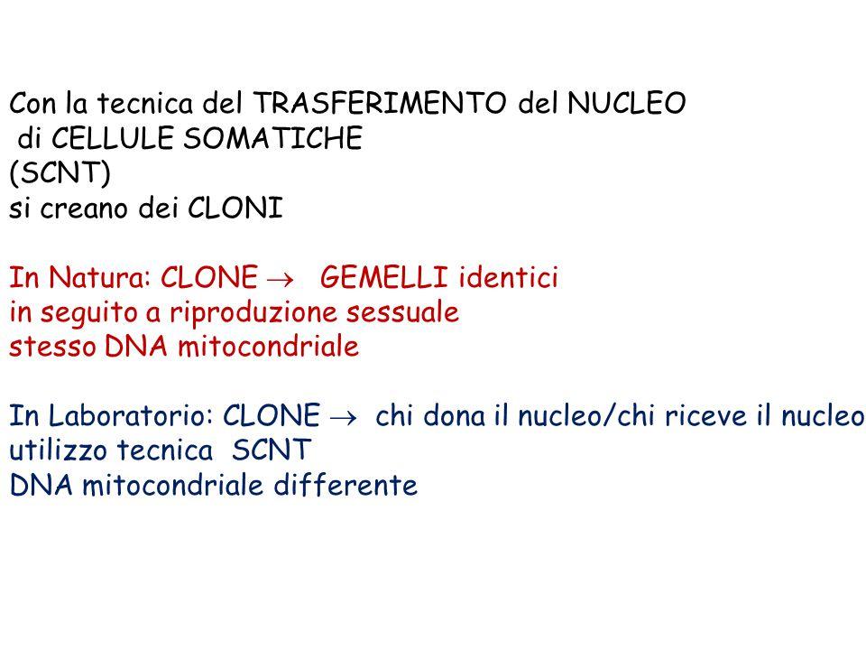 Con la tecnica del TRASFERIMENTO del NUCLEO di CELLULE SOMATICHE (SCNT) si creano dei CLONI In Natura: CLONE  GEMELLI identici in seguito a riproduzione sessuale stesso DNA mitocondriale In Laboratorio: CLONE  chi dona il nucleo/chi riceve il nucleo utilizzo tecnica SCNT DNA mitocondriale differente