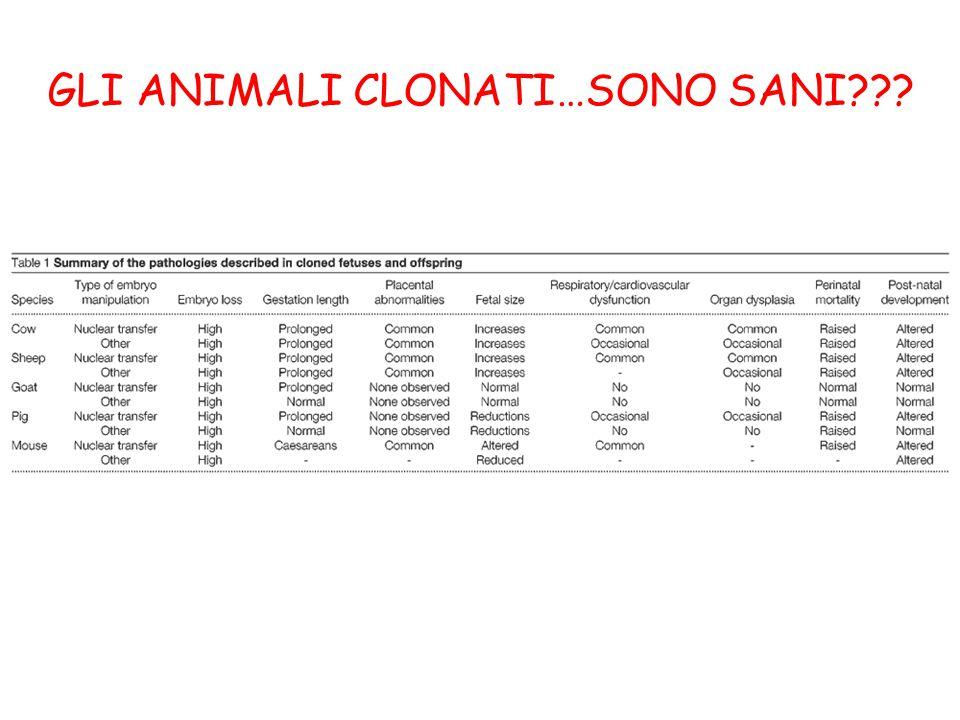 GLI ANIMALI CLONATI…SONO SANI???