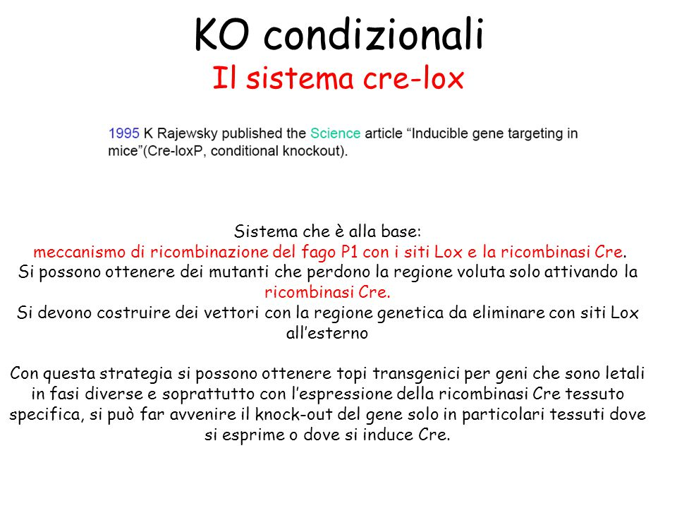 KO condizionali Il sistema cre-lox Sistema che è alla base: meccanismo di ricombinazione del fago P1 con i siti Lox e la ricombinasi Cre.