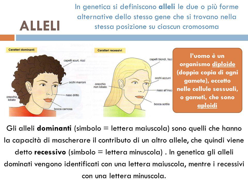 ALLELI Gli alleli dominanti (simbolo = lettera maiuscola) sono quelli che hanno la capacità di mascherare il contributo di un altro allele, che quindi viene detto recessivo (simbolo = lettera minuscola).