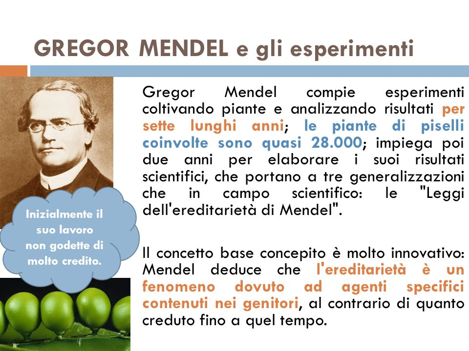 Gregor Mendel compie esperimenti coltivando piante e analizzando risultati per sette lunghi anni; le piante di piselli coinvolte sono quasi 28.000; impiega poi due anni per elaborare i suoi risultati scientifici, che portano a tre generalizzazioni che in campo scientifico: le Leggi dell ereditarietà di Mendel .