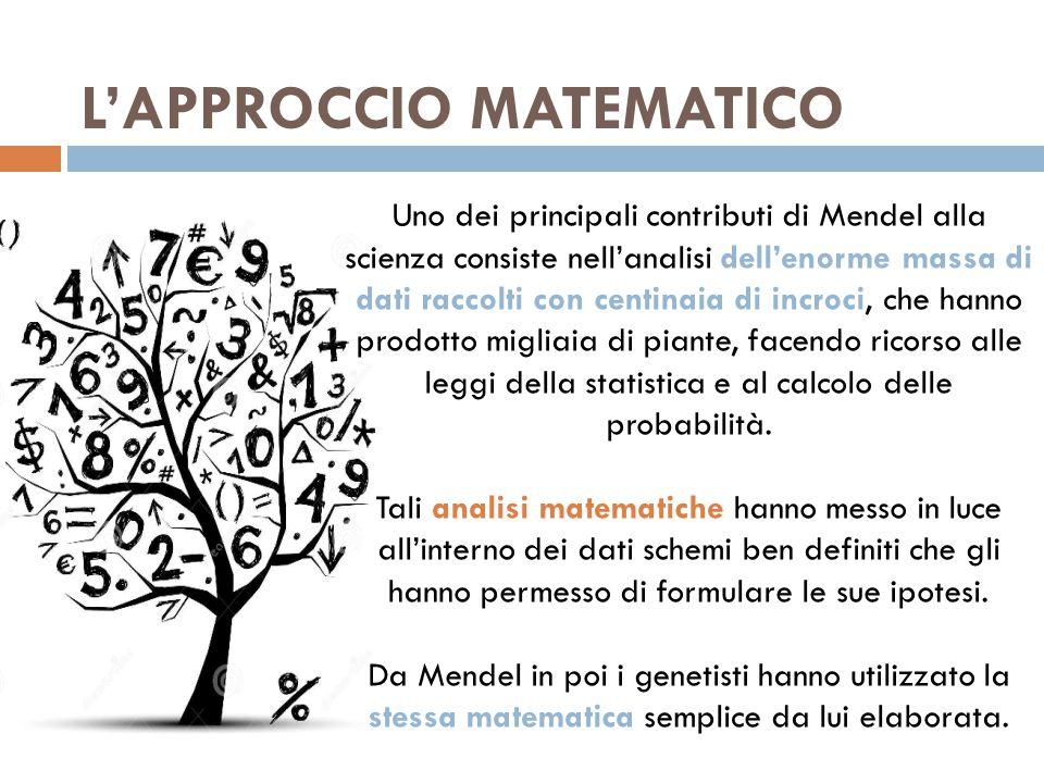L'APPROCCIO MATEMATICO Uno dei principali contributi di Mendel alla scienza consiste nell'analisi dell'enorme massa di dati raccolti con centinaia di incroci, che hanno prodotto migliaia di piante, facendo ricorso alle leggi della statistica e al calcolo delle probabilità.