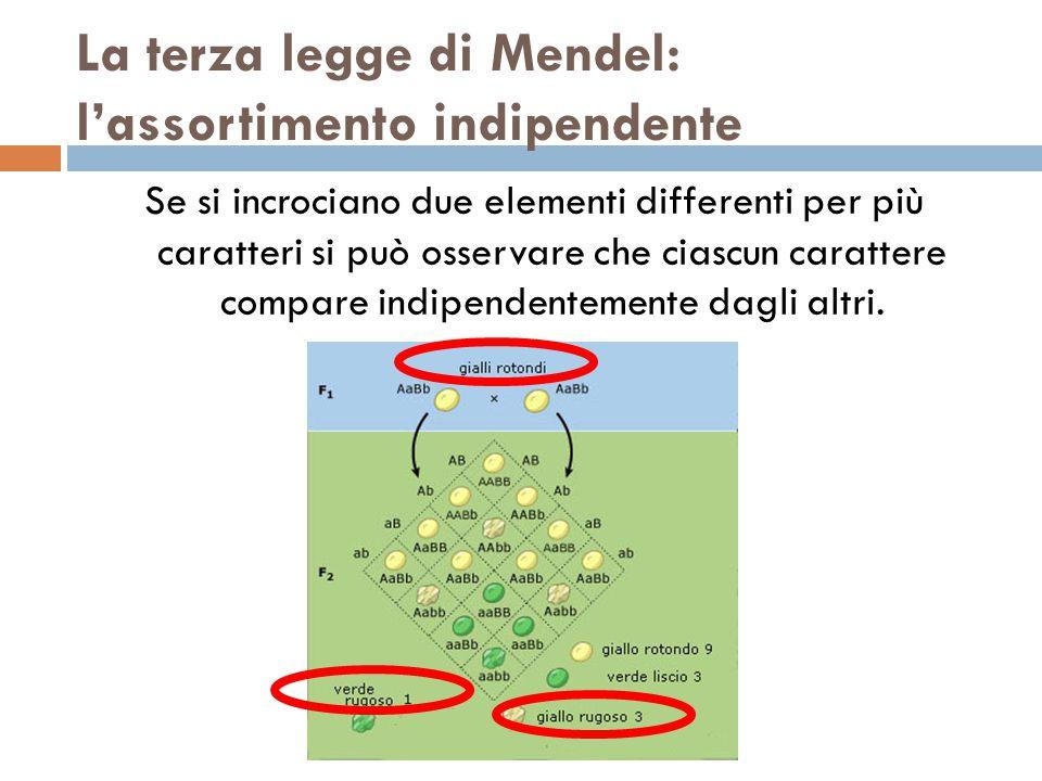 La terza legge di Mendel: l'assortimento indipendente Se si incrociano due elementi differenti per più caratteri si può osservare che ciascun carattere compare indipendentemente dagli altri.
