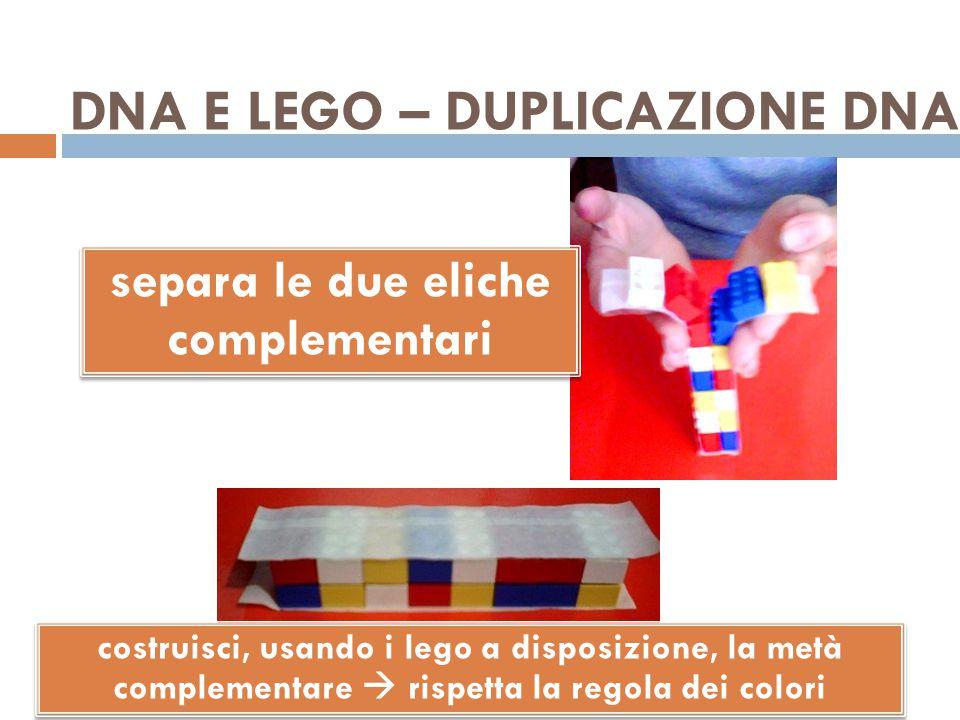 DNA E LEGO – DUPLICAZIONE DNA separa le due eliche complementari costruisci, usando i lego a disposizione, la metà complementare  rispetta la regola dei colori