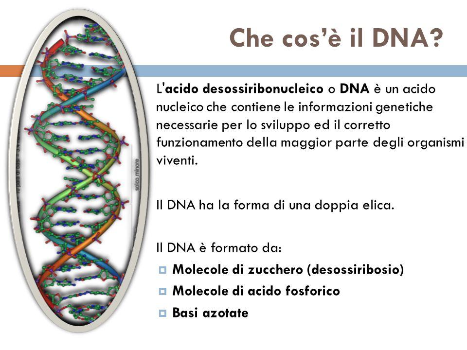 Che cos'è il DNA.