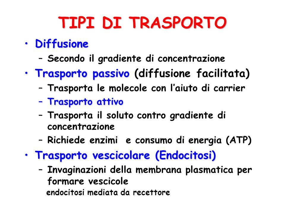 TIPI DI TRASPORTO DiffusioneDiffusione –Secondo il gradiente di concentrazione Trasporto passivoTrasporto passivo (diffusione facilitata) –Trasporta l