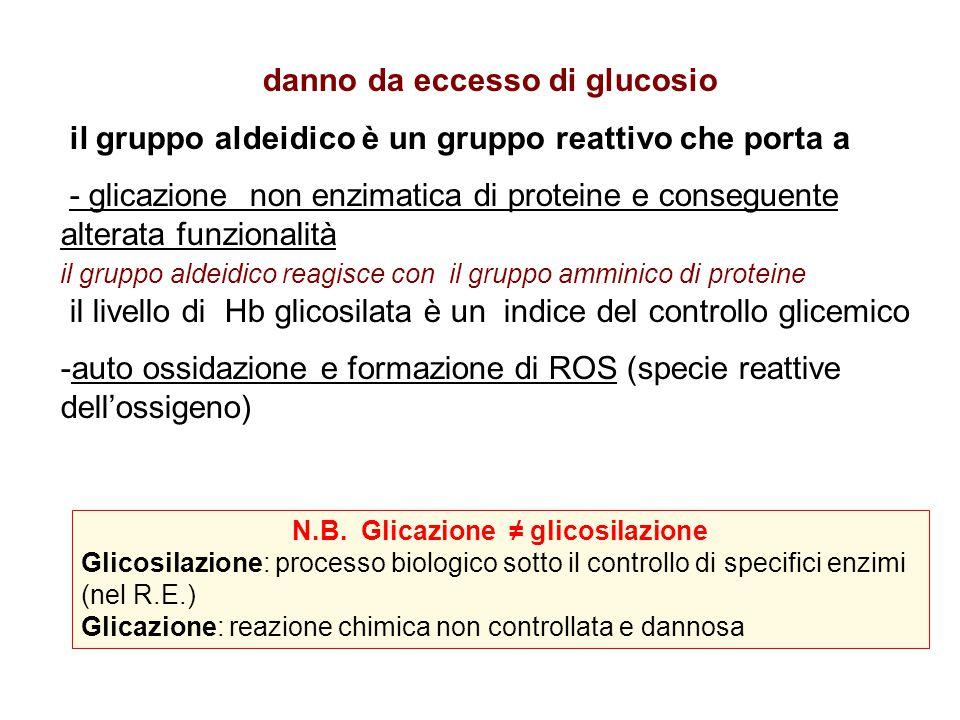 danno da eccesso di glucosio il gruppo aldeidico è un gruppo reattivo che porta a - glicazione non enzimatica di proteine e conseguente alterata funzionalità il gruppo aldeidico reagisce con il gruppo amminico di proteine il livello di Hb glicosilata è un indice del controllo glicemico -auto ossidazione e formazione di ROS (specie reattive dell'ossigeno) N.B.