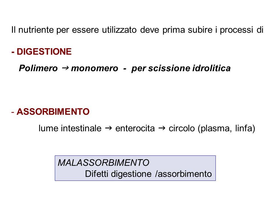 Il nutriente per essere utilizzato deve prima subire i processi di - DIGESTIONE Polimero  monomero - per scissione idrolitica - ASSORBIMENTO lume intestinale  enterocita  circolo (plasma, linfa) MALASSORBIMENTO Difetti digestione /assorbimento