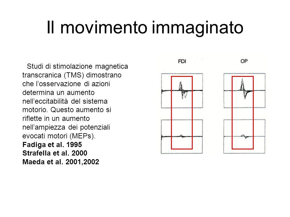 Il movimento immaginato ) Studi di stimolazione magnetica transcranica (TMS) dimostrano che l'osservazione di azioni determina un aumento nell'eccitab