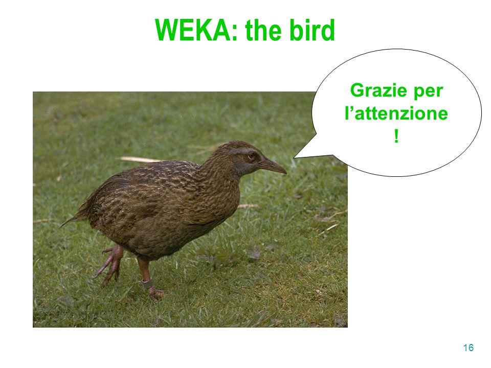16 WEKA: the bird Grazie per l'attenzione !