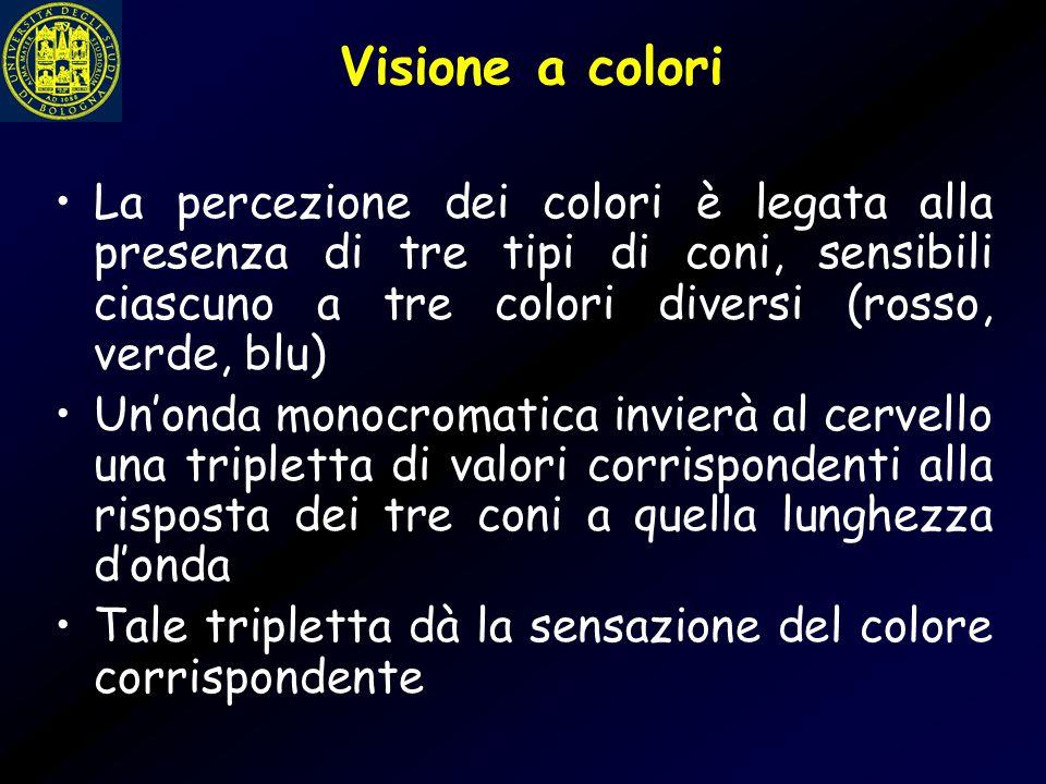 Visione a colori Ad esempio, un'onda di 500 nm (corrispondente al colore verde scuro) produrrà una tripletta di valori come quelli visibili in figura La tonalità di colore percepita dal cervello è quella relativa a tale tripletta