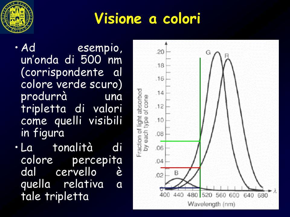 Sistema visivo umano La gamma dei livelli di intensità ai quali l'occhio può adattarsi è enorme (  10 10 ) Si passa dalla soglia scotopica al limite dell'abbagliamento La luminosità soggettiva (percepita dall'occhio) è una funzione logaritmica dell'intensità della luce incidente L'occhio umano non funziona simultaneamente sulla intera gamma dei livelli Piuttosto, passa attraverso una serie di livelli di adattamento alla intensità della luce