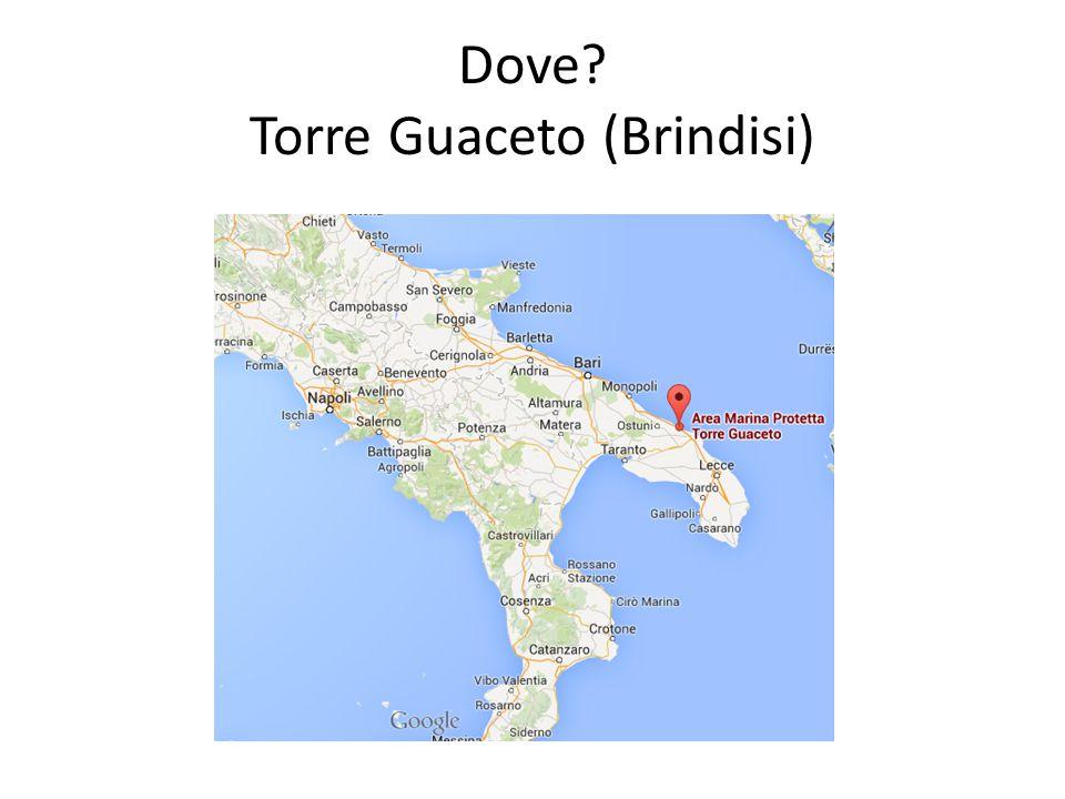 Dove Torre Guaceto (Brindisi)