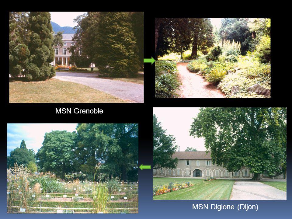 MSN Grenoble MSN Digione (Dijon)