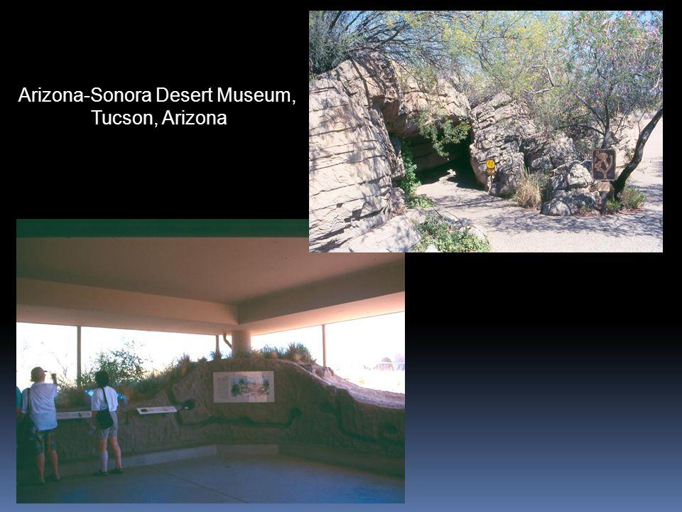 Arizona-Sonora Desert Museum, Tucson, Arizona