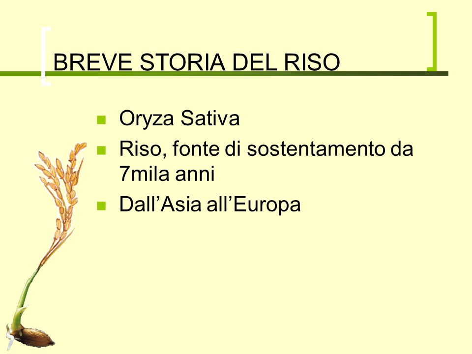 BREVE STORIA DEL RISO Oryza Sativa Riso, fonte di sostentamento da 7mila anni Dall'Asia all'Europa