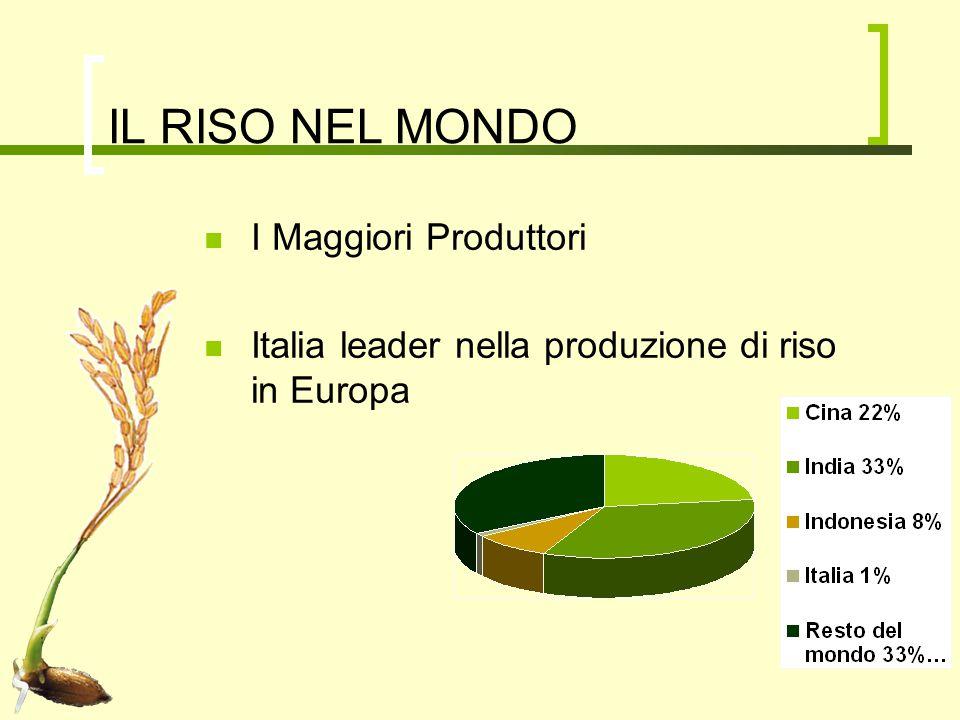 IL RISO IN ITALIA Superficie: 246.000 ettari Produzione:1milione e mezzo di tonnellate annue Originario, Balilla, Volano, Arborio…