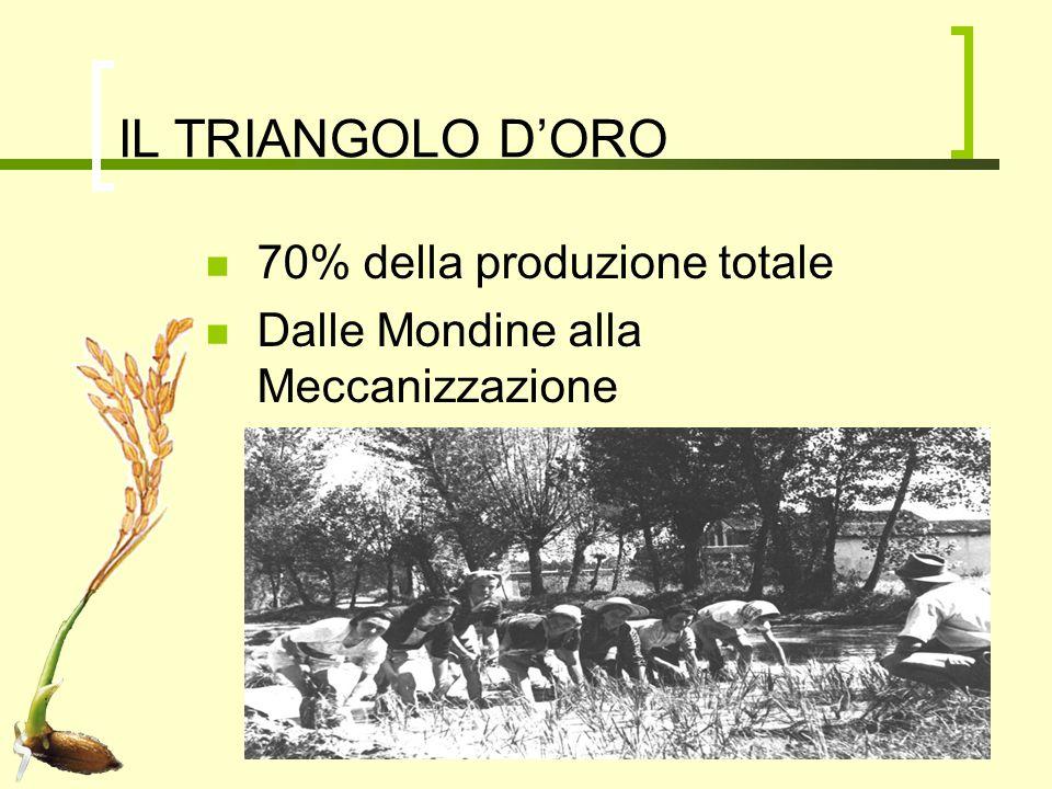 IL TRIANGOLO D'ORO 70% della produzione totale Dalle Mondine alla Meccanizzazione