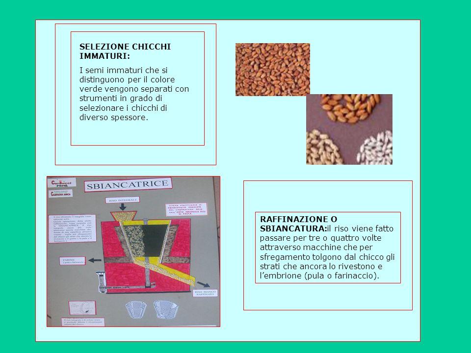 SELEZIONE CHICCHI IMMATURI: I semi immaturi che si distinguono per il colore verde vengono separati con strumenti in grado di selezionare i chicchi di diverso spessore.