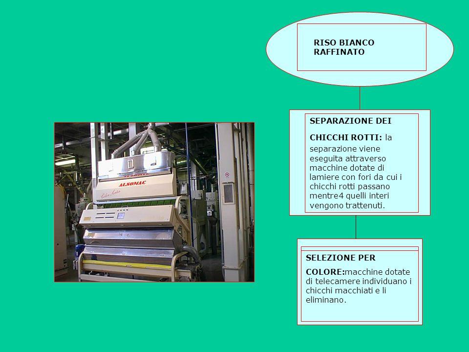 RISO BIANCO RAFFINATO SEPARAZIONE DEI CHICCHI ROTTI: la separazione viene eseguita attraverso macchine dotate di lamiere con fori da cui i chicchi rot