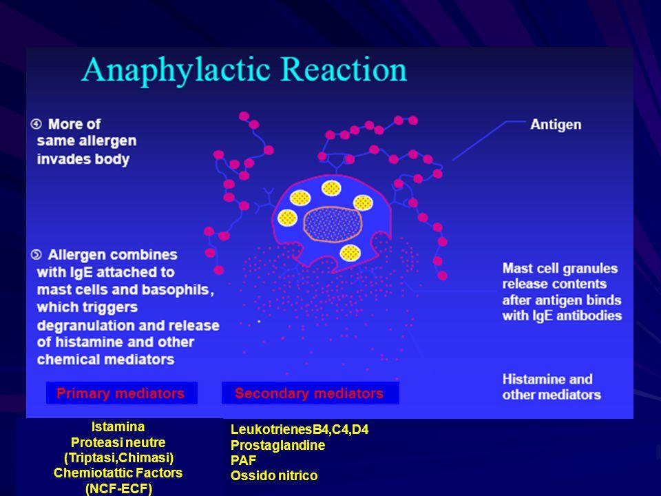 Istamina Proteasi neutre (Triptasi,Chimasi) Chemiotattic Factors (NCF-ECF) Primary mediatorsSecondary mediators LeukotrienesB4,C4,D4 Prostaglandine PA