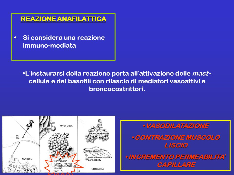 REAZIONE ANAFILATTICA Si considera una reazione immuno-mediata L'instaurarsi della reazione porta all'attivazione delle mast - cellule e dei basofili