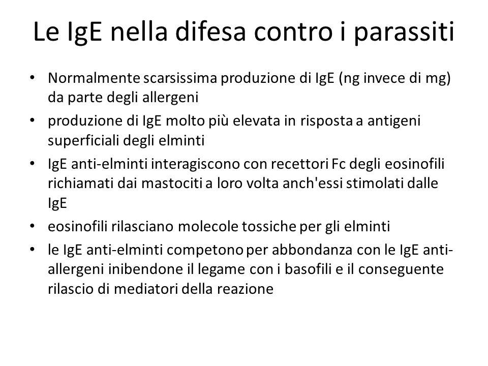Le IgE nella difesa contro i parassiti Normalmente scarsissima produzione di IgE (ng invece di mg) da parte degli allergeni produzione di IgE molto pi