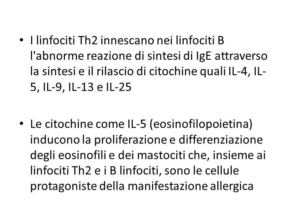 I linfociti Th2 innescano nei linfociti B l'abnorme reazione di sintesi di IgE attraverso la sintesi e il rilascio di citochine quali IL-4, IL- 5, IL-