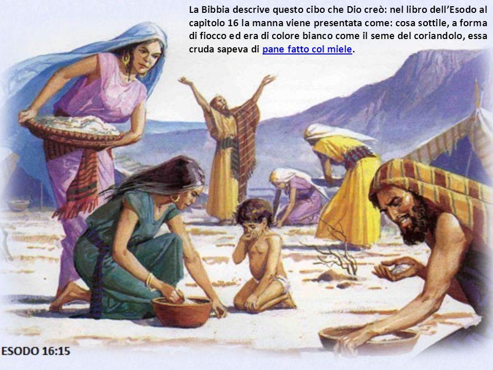 La Bibbia descrive questo cibo che Dio creò: nel libro dell'Esodo al capitolo 16 la manna viene presentata come: cosa sottile, a forma di fiocco ed er