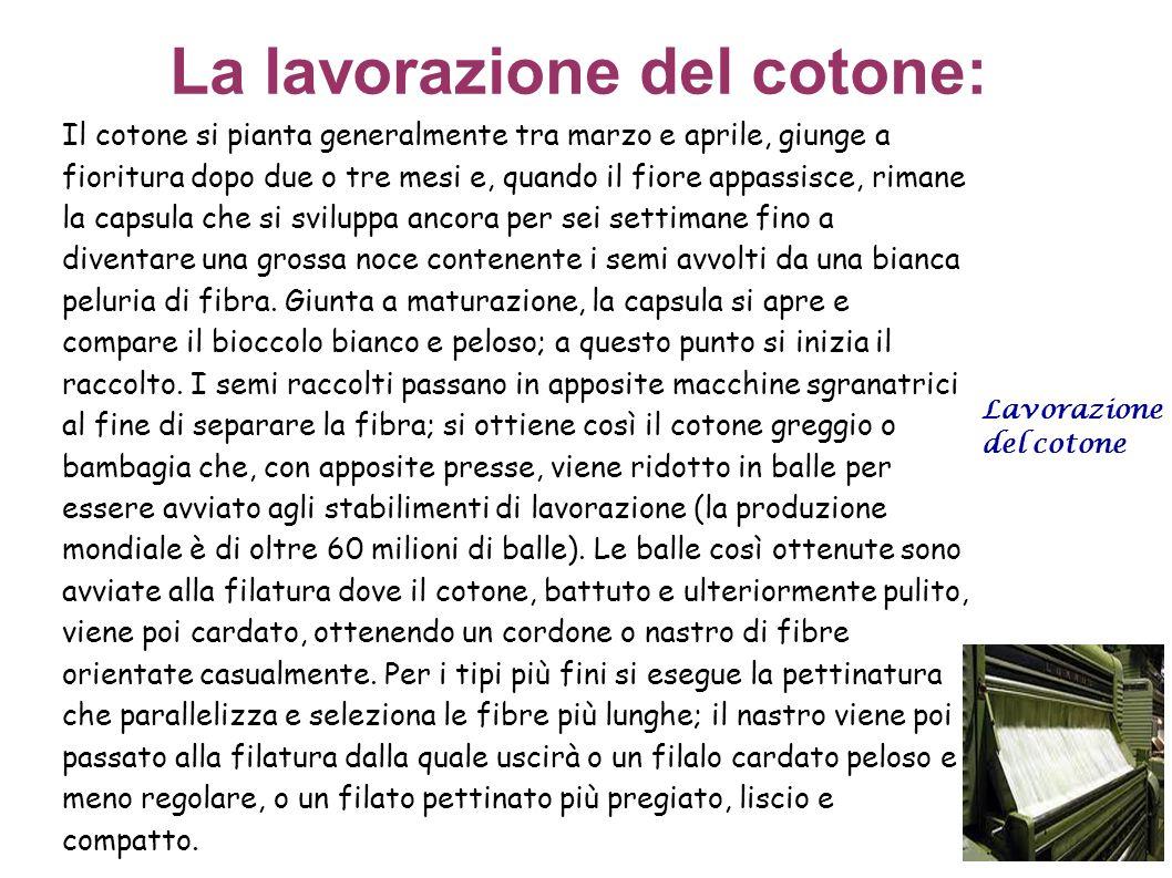 La lavorazione del cotone: Il cotone si pianta generalmente tra marzo e aprile, giunge a fioritura dopo due o tre mesi e, quando il fiore appassisce,
